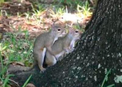 dos ardillas follando los gemelos mcnamara Los gemelos McNamara (I) ardillas follando